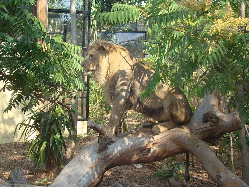 Parc zoologique du Cap Ferrat By Abujoy (Own work) CC BY-SA 2.5 via Wikimedia Commons