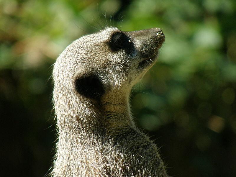 Zoo des Sables-d'Olonne By Marineg (Template:Marineg) CC BY 3.0 via Wikimedia Commons