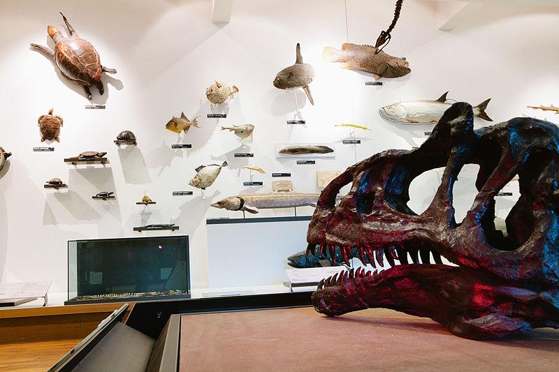 Muséum Aquarium de nancy Par Muséum-Aquarium de Nancy Muséum-Aquarium de Nancy (Travail personnel) CC BY-SA 3.0 via Wikimedia Commons