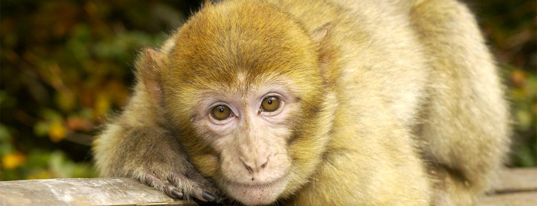 Forêt des Singes photo de la-foret-des-singes.com