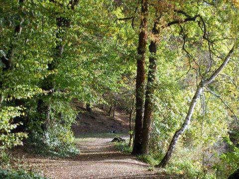 La forêt de Bercé