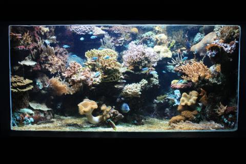 Aquarium Marin du Cap d'Agde