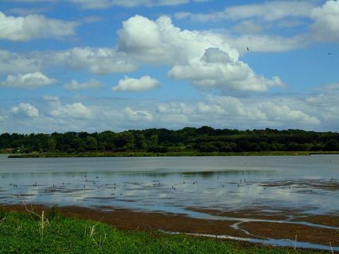 Le Marais d'Orx Par Egal1250 CC BY-SA 3.0 via Wikimedia Commons