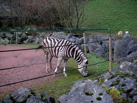 Parc Zoologique de Maubeuge By Chatsam (Own work) [Public domain], via Wikimedia Commons