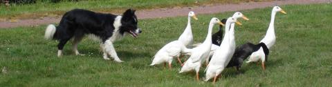 Parc Mouton Village photo de moutonvillage.fr