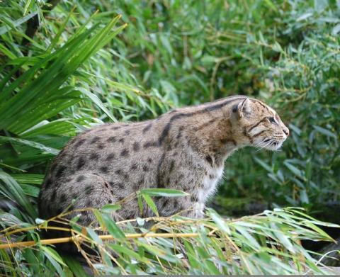 Zoo de Bordeaux Pessac By Chat_pecheur CC BY-SA 2.0 via Wikimedia Commons