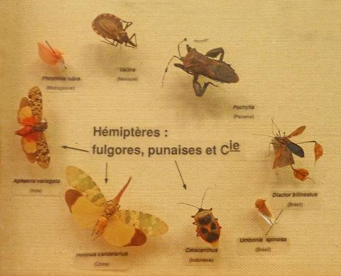 Musée Zoologique de Strasbourg By Ji-Elle (Own work) CC BY-SA 3.0 via Wikimedia Commons