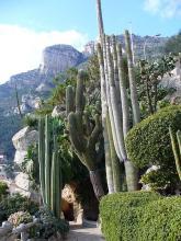 Jardin exotique de Monaco By Parisette [Public domain], via Wikimedia Commons