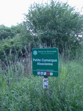 La Petite Camargue Alsacienne By Rauenstein CC BY-SA 3.0 via Wikimedia Commons