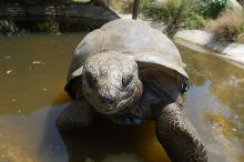 La Vallee des Tortues By Vallée des Tortues (Own work) CC BY-SA 3.0 via Wikimedia Commons