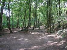 Paimpont et la forêt de Brocéliande By Suzelfe CC BY-SA 3.0 via Wikimedia Commons