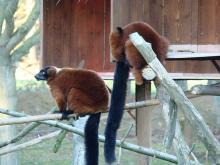 Zoo de la Bourbansais By Abujoy (Own work) CC BY-SA 3.0 via Wikimedia Commons