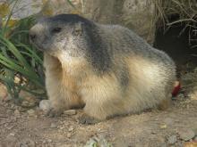 Parc animalier de Pradinas Par Clara.Hoke (Travail personnel) CC0 via Wikimedia Commons