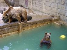 Parc zoologique d'Amnéville Par olis57 CC BY 2.0 via Wikimedia Commons
