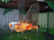 La Cité des insectes