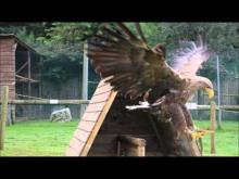 Les Aigles du Léman en vidéo