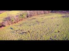 Safari Parc de Haute Saintonge en vidéo