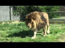 Parc zoologique de Saint-Martin-la-Plaine en vidéo