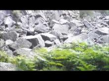 Vidéo de la Fosse-Arthour ( Basse Normandie )