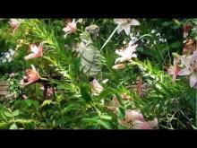 Abbaye de Valsaintes en vidéo