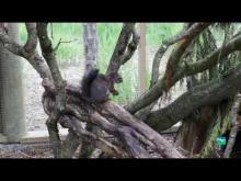 Zooparc de Trégomeur en vidéo