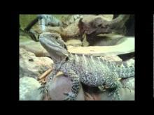 Parc Aquarium du Perigord Noir en vidéo