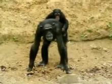 Parc Zoologique du Bois d'Attilly en vidéo