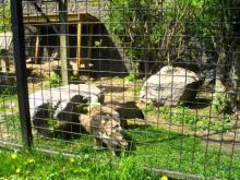 Parc Zoologique de Maubeuge en vidéo