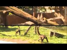 Natur'Zoo de Mervent en vidéo