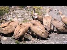 La Falaise aux Vautours en vidéo