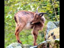 Domaine zoologique de Pescheray en vidéo