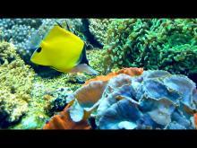 L'Aquarium du Grand Lyon en Vidéo