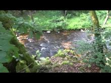 Vidéo Le Saut de Gouloux