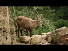 Parc Animalier d'Auvergne en vidéo