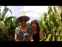 Labyrinthe Végétal en vidéo