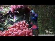 Aquarium Tropical de la Porte Dorée en vidéo