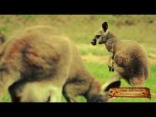 Le Parc Australien à Carcassonne en vidéo