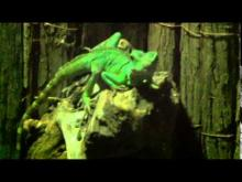 Vidéo de l'Aquarium Val de Loire-Touraine