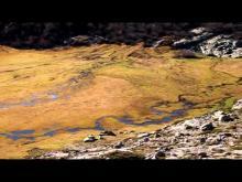 Vidéo des pozzines du Lac de Nino