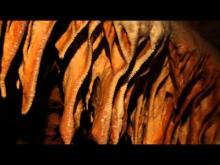 Vidéo de la Grotte du Bosc