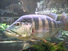 Site Aquarium d'Amnéville en Vidéo