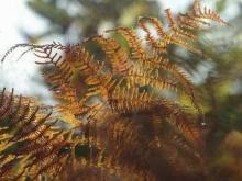 Vidéo de la forêt de Bercé