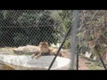 Parc Zoologique de Fréjus en vidéo