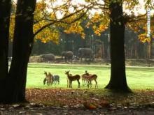 Château, parc et jardin zoologique de Thoiry en vidéo