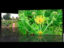 Jardin des Plantes de Rouen en vidéo