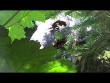 Tropical Parc en vidéo