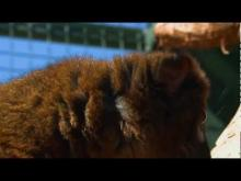 Jardin Zoologique Tropical en vidéo