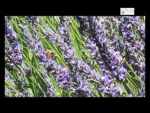 Distillerie Bleu Provence en vidéo