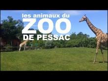 Zoo de Bordeaux Pessac en vidéo