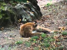 Parc animalier des Pyrénées en vidéo